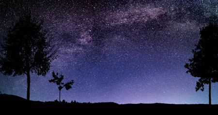 Amazing Forest Night Sky Milky Way Moon and Stars Time Lapse 4k