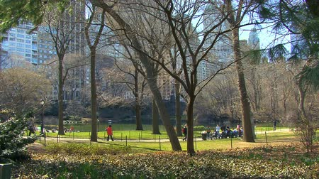 state park : People Walking at Central Park NYC HD Stock Footage