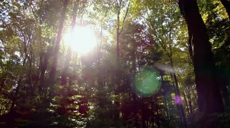 Forest Traveling Sun Flare rays trough leaves and branches 4k Wideo