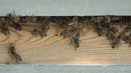 fazilet : entrance to the hive and bees coming and going