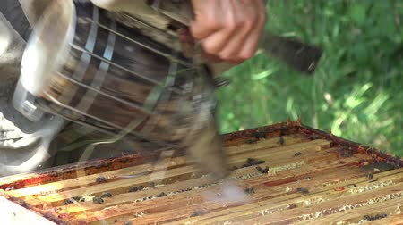 королева : cleaning up of frames to enable laying Enhances removal of frames before honey extraction Стоковые видеозаписи