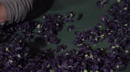 fazilet : Preparation and drying of flowers and leaves