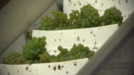semillon : winding stairway to the Press Stock Footage