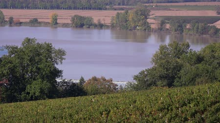 prestigious : Vineyard hills on the banks of the Garonne Stock Footage