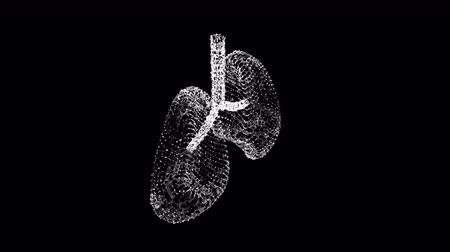 Lungs with trachea bronchi internal organ human. Pulmonology medicine science technology concept. Wireframe low poly mesh. Video available in 4K FullHD and HD render footage