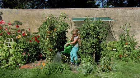 bailer : Cute little girl helping mother - watering tomato and flowers in the backyard