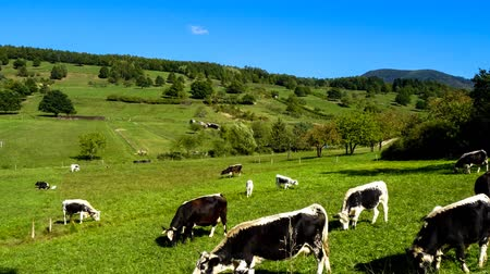 francja : Green pasturage in Alsace, France. Timelapse view. Wideo