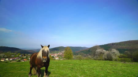 hdtv : Beautiful horse on pasturage, sunny spring day. 4k high resolution.