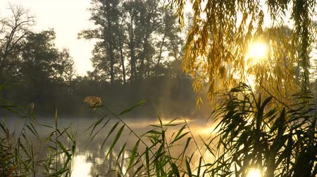 catástrofe : Sunrise on the riverbank. Landscape with reeds on first plan and warm sun through trees and smoke on the river.