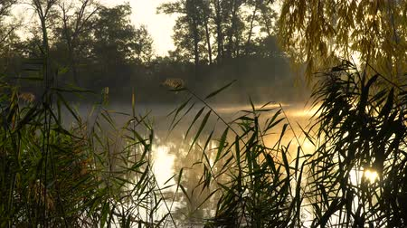catástrofe : Sunrise on the riverbank. Landscape with reeds on first plan and warm sun through trees and smoke on the river Stock Footage