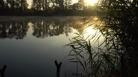 cattail : Sunrise on the riverbank. Landscape with reeds on first plan and smoke on the water