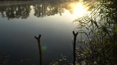 catástrofe : Sunrise on the riverbank. Landscape with reeds and fishing rod stands