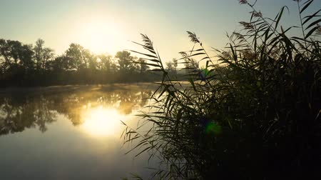 kamış : Sunrise on the riverbank. Landscape with reeds on first plan and smoke on the water