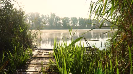 catástrofe : Sunrise on the riverbank. Landscape with wooden bridge among reeds and smoke on the water