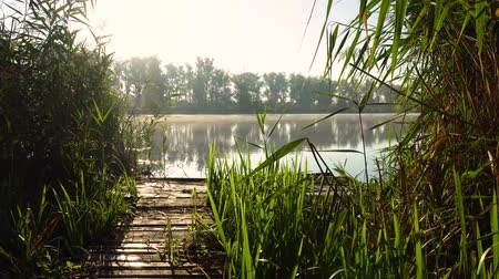 cattail : Sunrise on the riverbank. Landscape with wooden bridge among reeds and smoke on the water