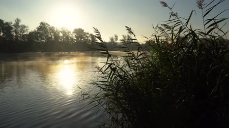 catástrofe : Sunrise on the riverbank. Landscape with reeds on first plan and smoke on the water