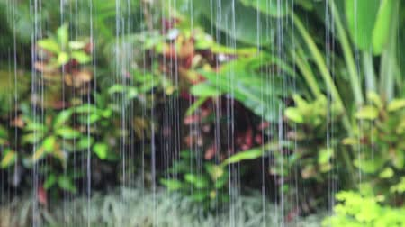 areca : Heavy tropical rain falling from the roof, Tropical garden landscape with Crotons and Areca palm tree in background. Bali, Indonesia. Stock Footage