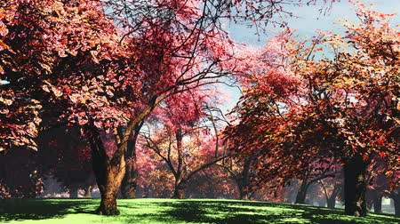 bloesemboom : Japanse Tuin Cherry Blossoms Tree 3D render Stockvideo