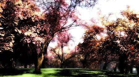 jardim : Japanese Garden Cherry Blossoms Tree 3D render