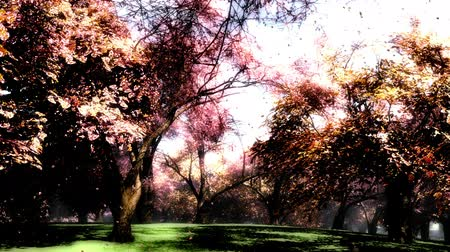 fantasia : Japanese Garden Cherry Blossoms Tree 3D render