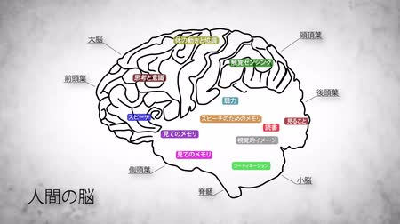rész : The human brain structure animation illustration Stock mozgókép