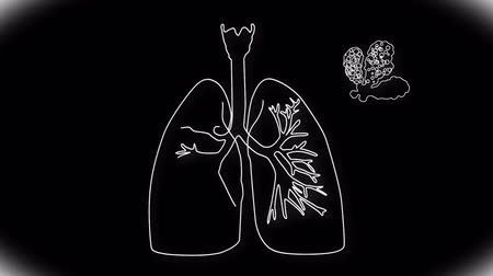 akciğer : Human Lung structure animation illustration