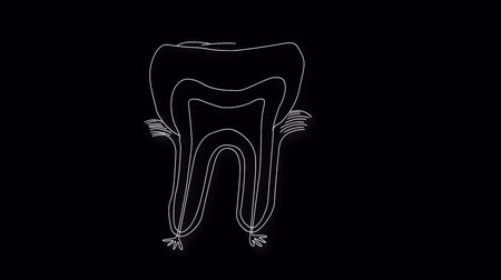 raiz : Human Tooth structure animation illustration