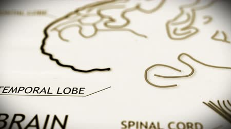 médicos : The human brain structure animation illustration Shallow Depth of Field Film Shot Design