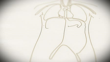 rész : Human Organs structure animation illustration Shallow Depth of Field Film Shot Design Stock mozgókép