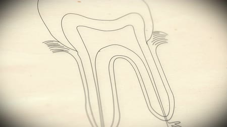 coroa : Human Tooth structure animation illustration Shallow Depth of Field Film Shot Design Vídeos