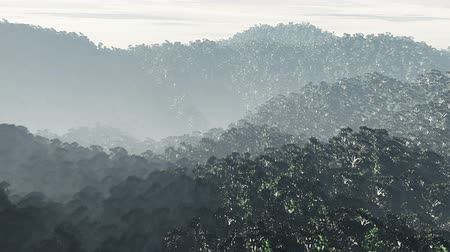 deep forest : Jungle 2 aerial 3D render Stock Footage