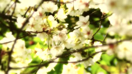 springtime : Springtime Beauty Flowers Stock Footage