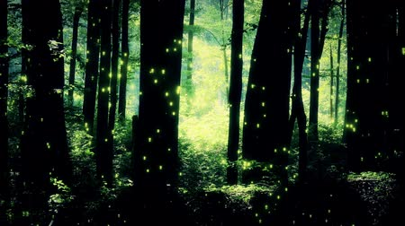 deep forest : 4K Fairy Tale Magic Forest - Fantasy Deep Woods with Fireflies Stock Footage