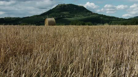 gerçeküstü : 4K Harvested Grain Stems on a Wheat Field with a Volcanic Hill in the Background