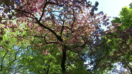 springtime : 4K Springtime Blossoming Flowers Decidous Trees lowangle Stock Footage