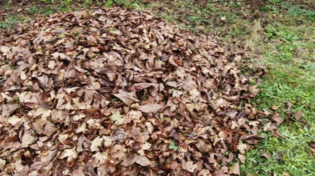amendment : 4K Pile of Autumn  Fall Leaves in a Garden - Preparing compostation process agriculturalhorticultural activity in the countryside  rural areas to make beneficial organic matter and make humus for land cultivation