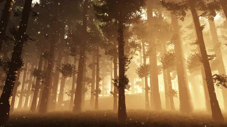 timberland : Mysterious Fairy Tale Deep Forest with Fireflies 1