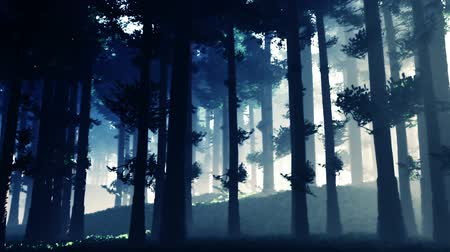 deep forest : Mysterious Deep Fairy Tale Magical Pine Forest 3D Animation Stock Footage