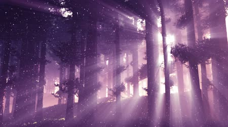 timberland : Mysterious Fairy Tale Magic Deep Forest with Lightrays 3D Animation
