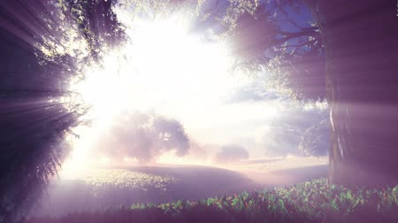 duch : Amazing Natural Wonderland in the Sunset Sunrise 3D Animation with cinematic camera motion Dostupné videozáznamy