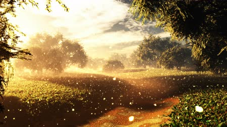 stardust : Amazing Natural Wonderland with Fireflies in the Sunset Sunrise 3D Animation with cinematic camera motion