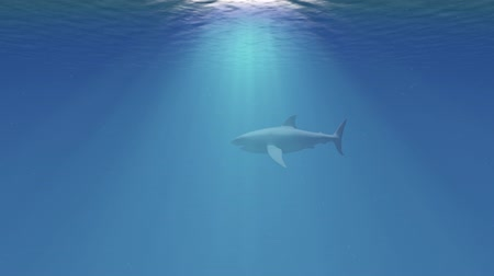 requins : 4K Great White Shark dans la vue Ocean Side 1