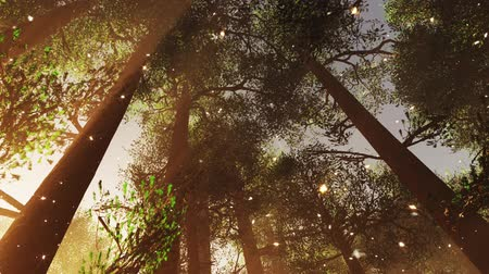 pinho : 4K Mystic Fantasy Woods with Fireflies Tilt Down and Pan stylized