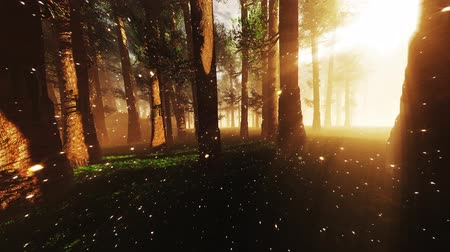fireflies : 4K Mystic Fantasy Woods with Fireflies Wide Angle Pan stylized