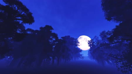 mehtap : 4K Spooky Magic Forest and Fullmoon Wide Angle Pan Stok Video