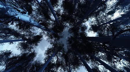 timberland : 4K Winter Pine Forest Low Wide Lens Camera Spinning Around Seamlessly