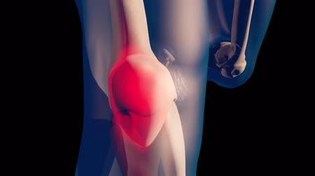 část těla : 4K Knee Pain in Human Body Transparent Design with Matte 3D Animation
