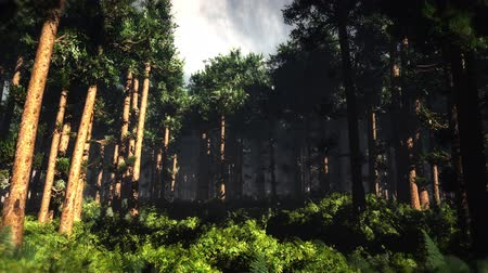 deep forest : 4K Epic Evergreen Forest Cinematic 3D Animation 2