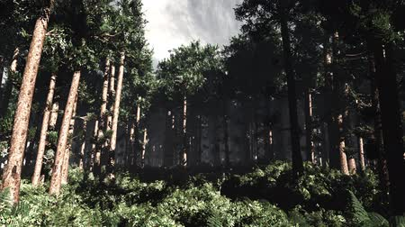fatörzs : 4K Epic Evergreen Forest Cinematic 3D Animation 3