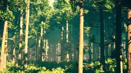 eng : 4K Epic Evergreen Forest Cinematic 3D Animation 4